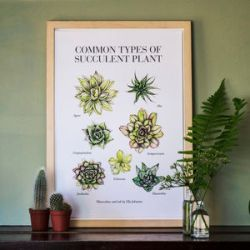 preview_illustrated-guide-to-succulents-limited-edition-print